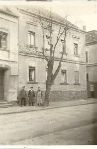 Prozeßbirnbaum